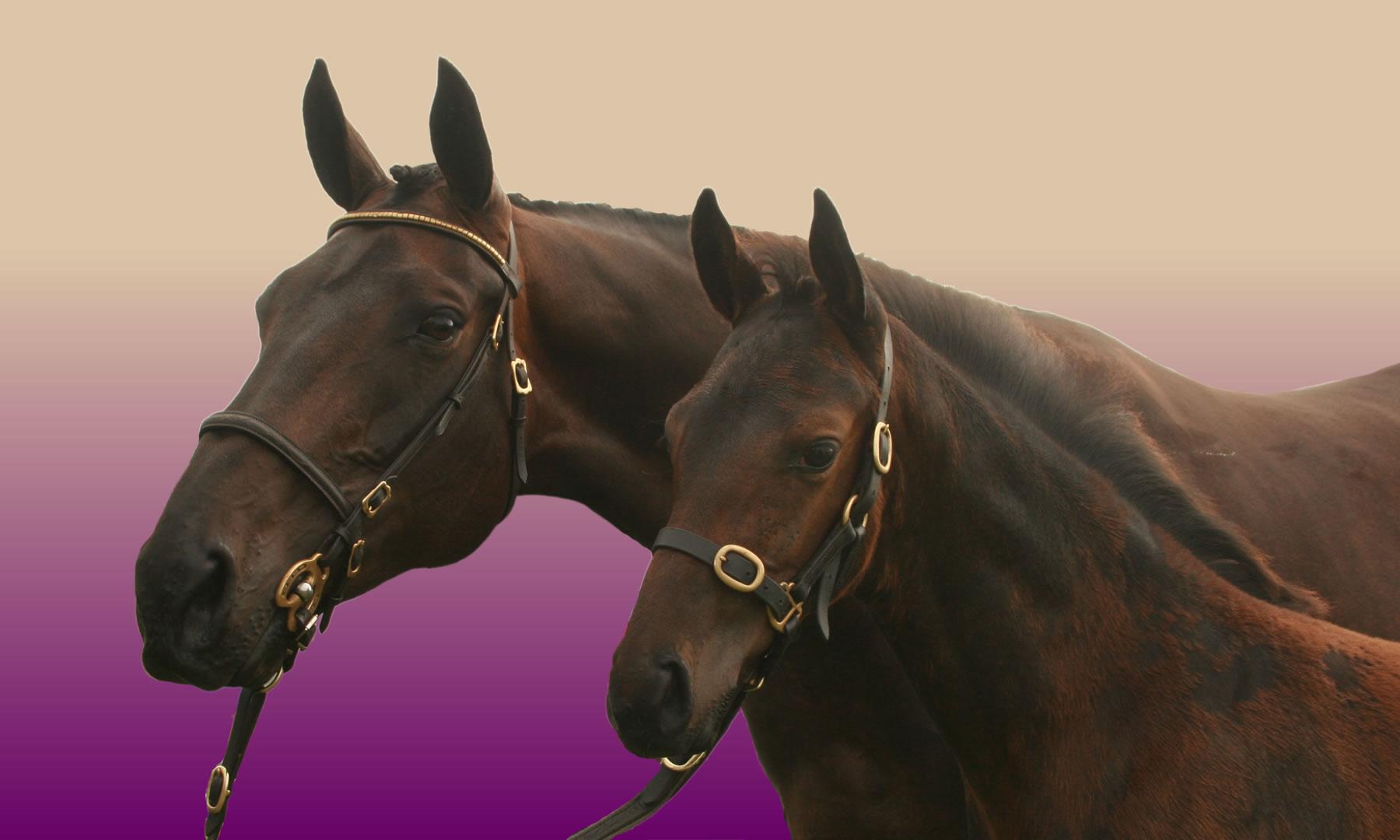 Equestria mare and foal bg